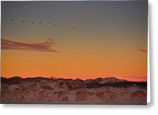 Sunset Greeting Cards Greeting Cards - Birds in Flight at Sunrise Greeting Card by Kristina Deane