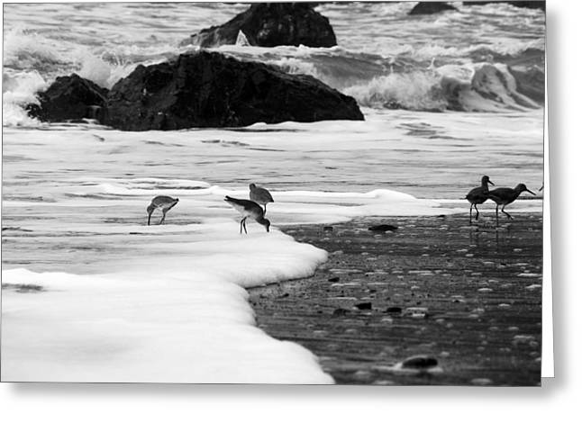 Birds In The Waves Black And White Greeting Card by Sierra Vance