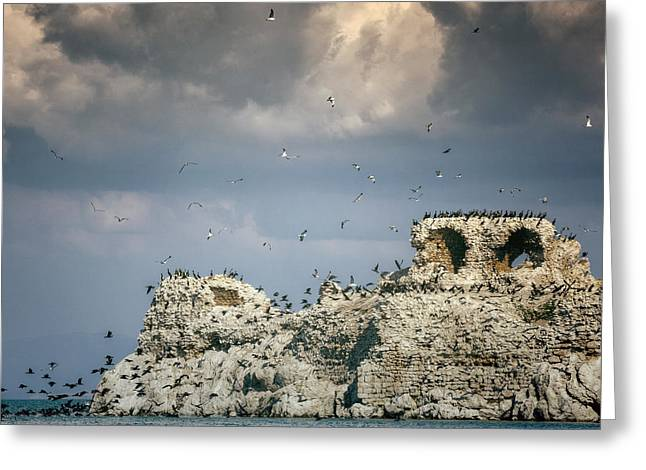 Seabirds Photographs Greeting Cards - Birds Island Greeting Card by Joana Kruse