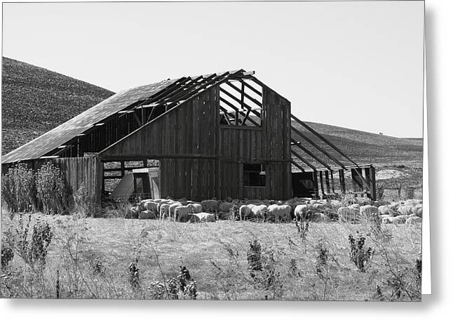 Solano Photographs Greeting Cards - Birds Landing Barn Greeting Card by Troy Montemayor