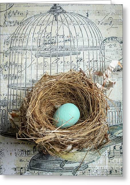 Birds Nest Greeting Card by Edward Fielding