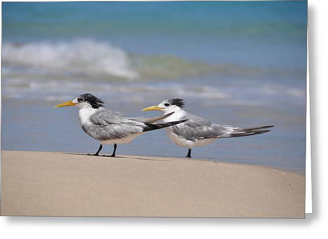 Surf City Greeting Cards - Birds of a Feather Greeting Card by Csilla Florida