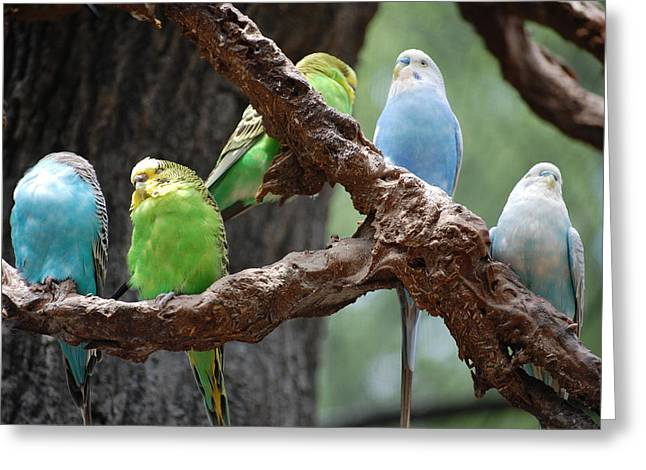 Jame Hayes Greeting Cards - Birds of a Feather Greeting Card by Jame Hayes