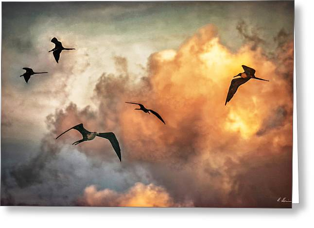 Himmel Greeting Cards - Birds of Paradise Greeting Card by Hanny Heim