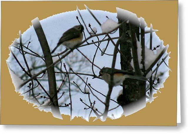 Bird On The Ground Greeting Cards - Birds Of Winter Snow Greeting Card by Debra     Vatalaro