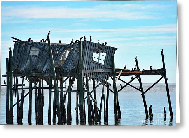 Birds On A Wreck Greeting Card by Pam Schmitt