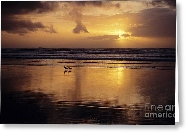 California Beach Art Greeting Cards - Birds on Beach Greeting Card by Ali ONeal - Printscapes