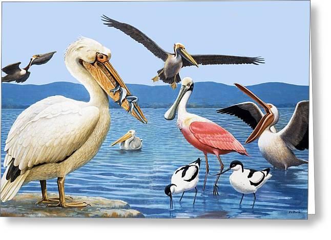 Brown Pelicans Greeting Cards - Birds with strange beaks Greeting Card by R B Davis