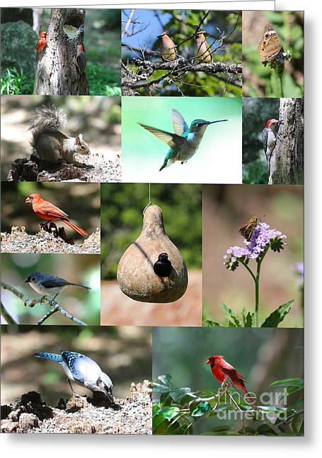 Nature Center Greeting Cards - Birdsong Nature Center Collage Greeting Card by Carol Groenen