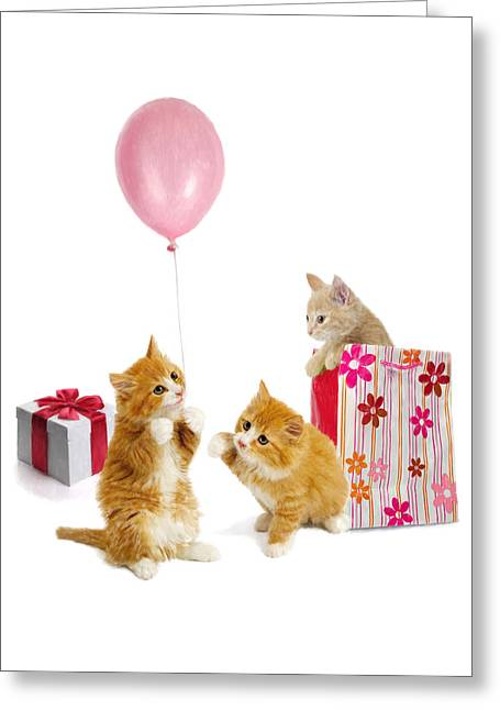 Humorous Greeting Cards Greeting Cards - Birthday Kitties Greeting Card by Bob Nolin
