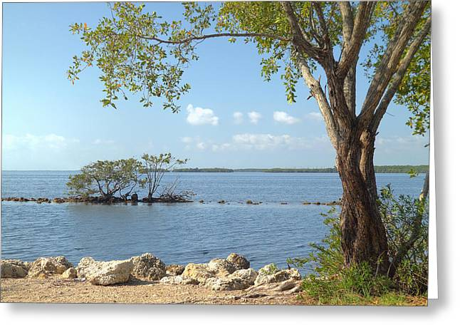 Salt Sea Greeting Cards - Biscayne National Park-2 Greeting Card by Rudy Umans