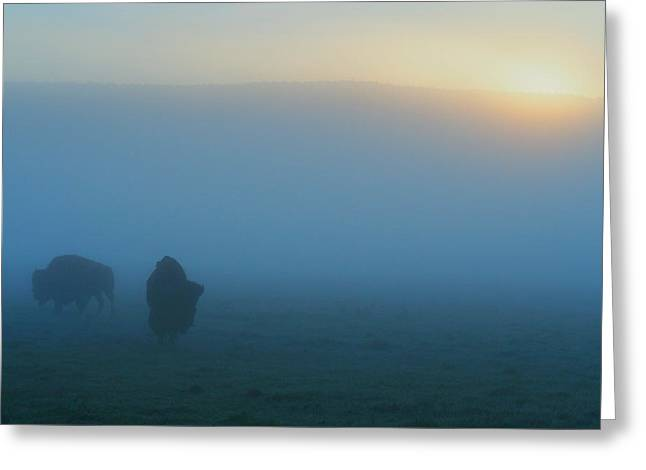 Yellowstone National Park Greeting Cards - Bison in the Mist Greeting Card by Ryan Scholl
