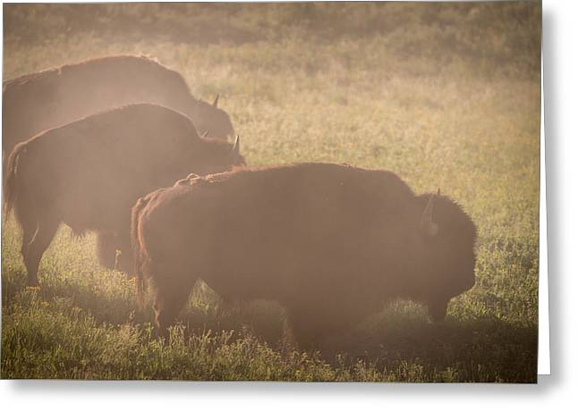 Fog Mist Greeting Cards - Bison Morning Mist Yellowstone Greeting Card by Steve Gadomski
