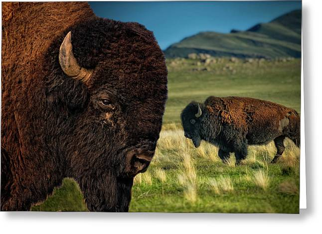 Bison On The Plain Greeting Card by Paul W Sharpe Aka Wizard of Wonders