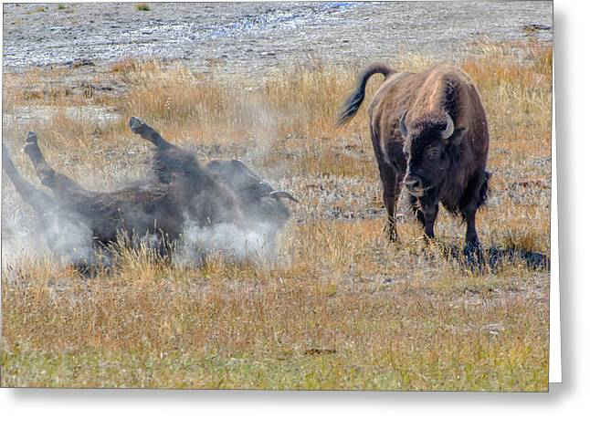 Pairs Greeting Cards - Bison Wallow Greeting Card by Evelyn Harrison