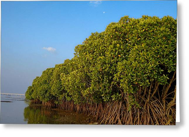 Mangrove Forest Greeting Cards - Bit of Mangrove Greeting Card by Vivek Anand