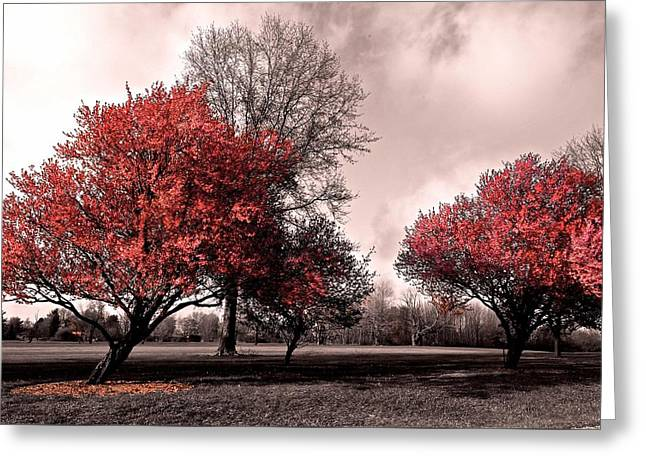 Impending Greeting Cards - Bitter Sweet Greeting Card by Frozen in Time Fine Art Photography