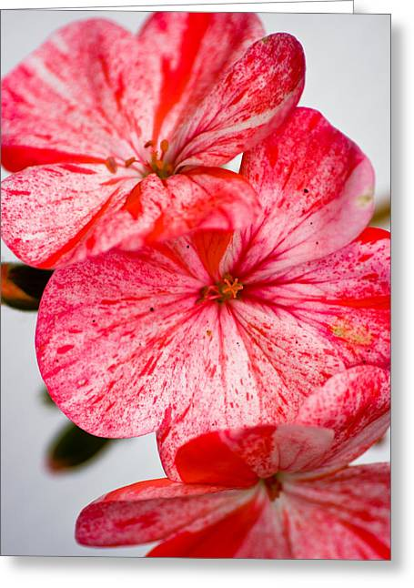 Hanging Baskets Greeting Cards - Bizzy Lizzy Greeting Card by Brian Roscorla