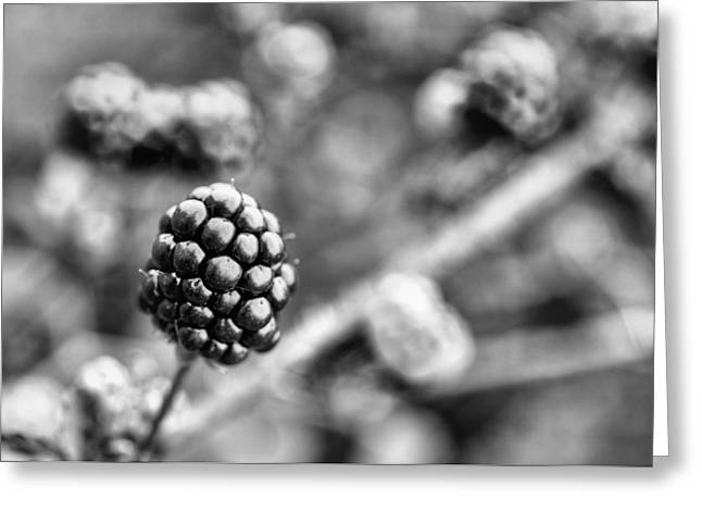 Black Berries Photographs Greeting Cards - Black and White Blackberry Greeting Card by JC Findley