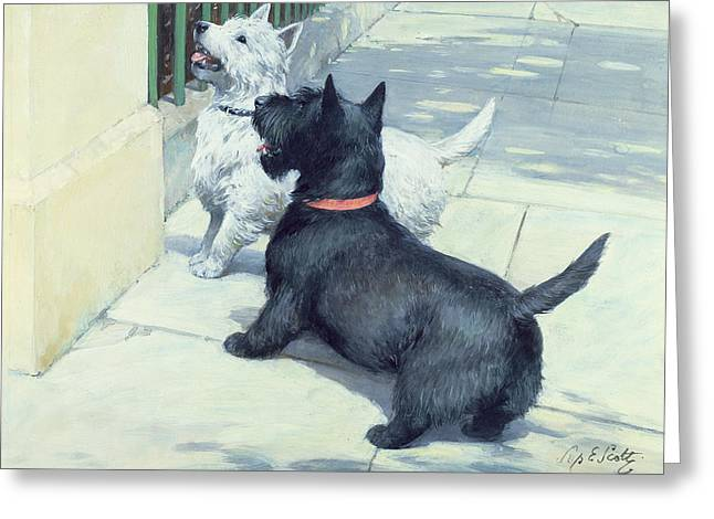 Scottish Terrier Puppy Greeting Cards - Black and White Dogs Greeting Card by Septimus Edwin Scott