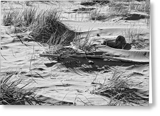 Maine Beach Digital Art Greeting Cards - Black and White Driftwood and Beach Grass Popham Beach Maine Greeting Card by Keith Webber Jr