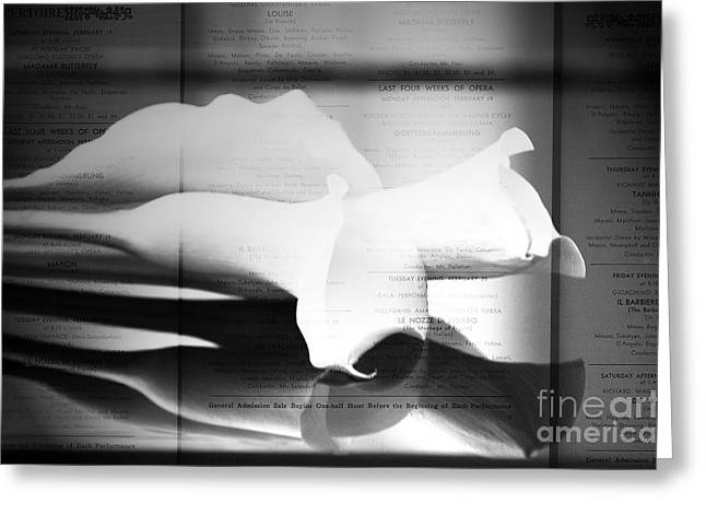 Award Digital Greeting Cards - Black and White Fine Art Photography - Opera Calla Lilly Greeting Card by Anahi DeCanio - ArtyZen Studios
