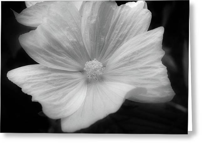 Black And White Floral Greeting Card by Rhonda Barrett