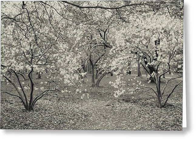 Pink Flower Branch Greeting Cards - Black and White Flower Trees Greeting Card by Ariane Moshayedi