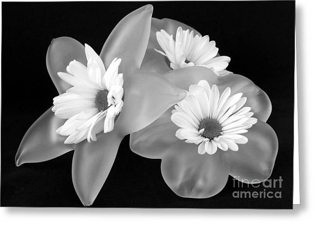 Black Top Greeting Cards - Black and White Flowers in holders Greeting Card by Barbie Corbett-Newmin