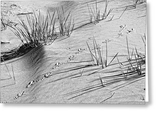 Maine Beach Digital Art Greeting Cards - Black and White Footprints and Beach Grass Popham Beach Maine Greeting Card by Keith Webber Jr