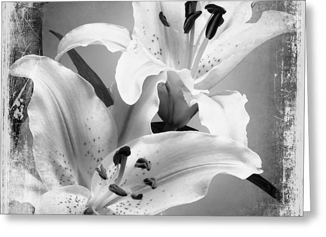 Black And White Grunge Lilies Greeting Card by Georgiana Romanovna