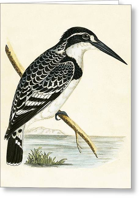 Black And White Kingfisher Greeting Card by English School