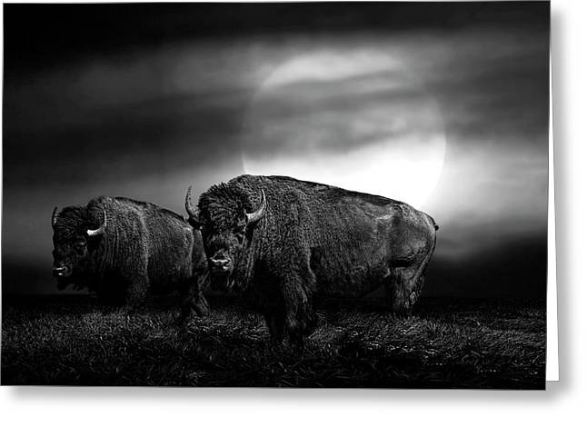 Black And White Of An American Buffalo Under A Super Moon Greeting Card by Randall Nyhof