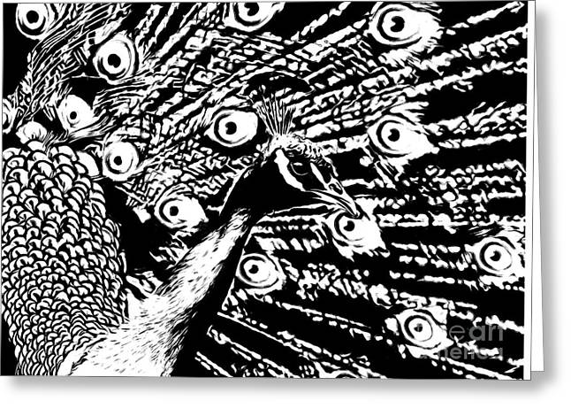 Pen And Ink Drawing Greeting Cards - Peacock Greeting Card by Tara Schlayer