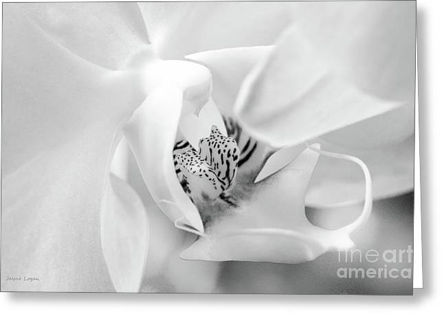 Crisp Greeting Cards - Black and White Phaeleonopsis Orchid Photography Greeting Card by Jayne Logan Intveld