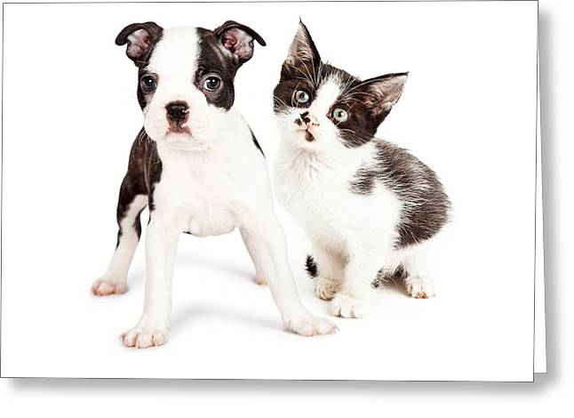 Cute Kitten Greeting Cards - Black and White Puppy and Kitten Together Greeting Card by Susan  Schmitz