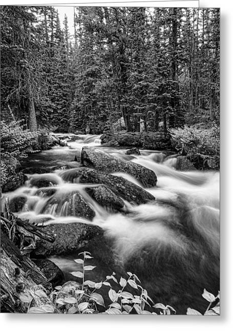 Beauty Creek Greeting Cards - Black and White Roosevelt National Forest Stream Portrait Greeting Card by James BO  Insogna
