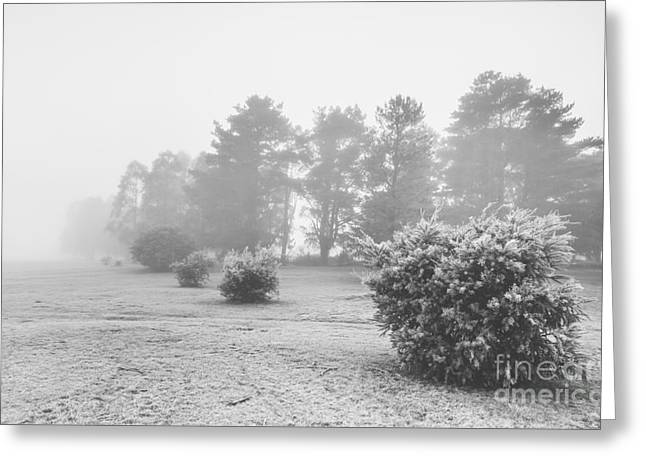 Black And White Snow Landscape Greeting Card by Jorgo Photography - Wall Art Gallery
