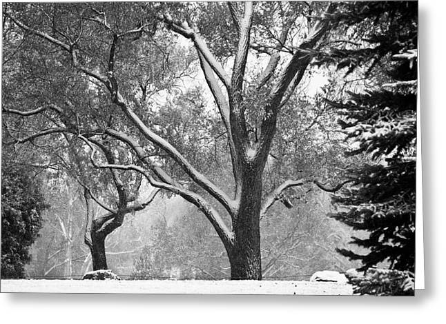 Bw Canvas Art Greeting Cards - Black and White Snowy Landscape Greeting Card by James BO  Insogna
