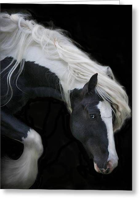 Gypsy Vanner Horse Greeting Cards - Black and White Study V Greeting Card by Terry Kirkland Cook