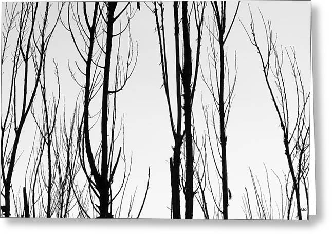 Striking Images Greeting Cards - Black and White Tree Branches Abstract Greeting Card by James BO  Insogna