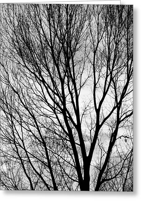 Bw Canvas Art Greeting Cards - Black and White Tree Branches Silhouette Greeting Card by James BO  Insogna