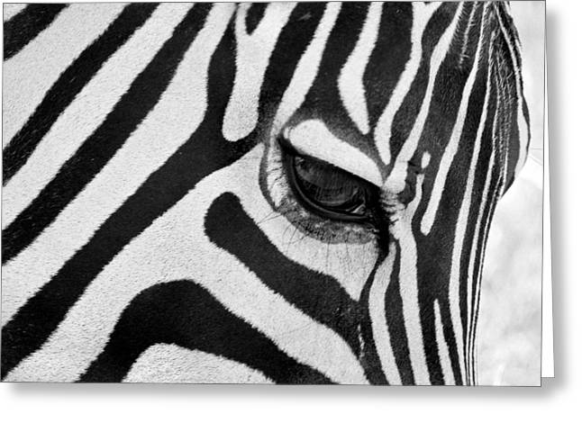 Zebra Patterns Greeting Cards - Black And White Zebra Close Up Greeting Card by Pierre Leclerc Photography