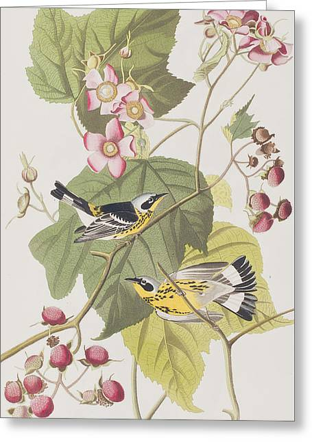 Pink Flower Branch Greeting Cards - Black and Yellow Warblers Greeting Card by John James Audubon