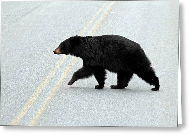 Hibernation Greeting Cards - Black Bear Crossing the road  Greeting Card by Pierre Leclerc Photography
