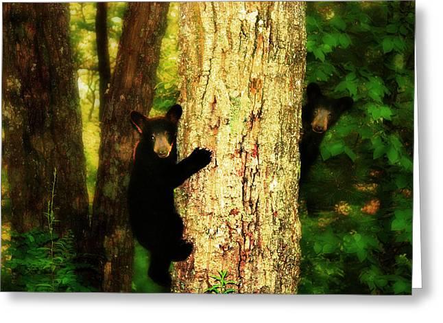 Black Bear Climbing Tree Greeting Cards - Black Bear Cubs Greeting Card by Gray  Artus