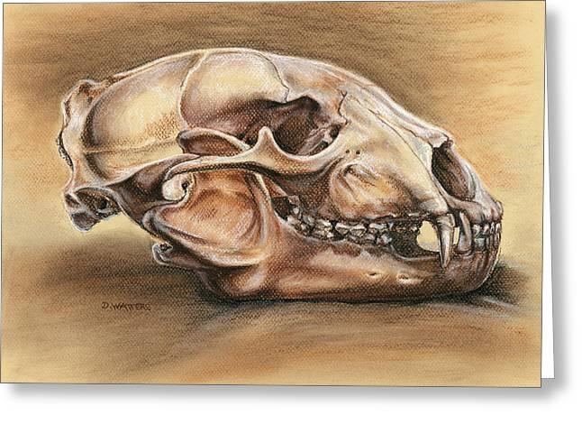Earth Tones Drawings Greeting Cards - Black Bear Skull Greeting Card by Darlene Watters