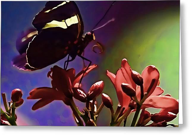 Artistic Photography Greeting Cards - Black Butterfly with oil effect Greeting Card by Tom Prendergast