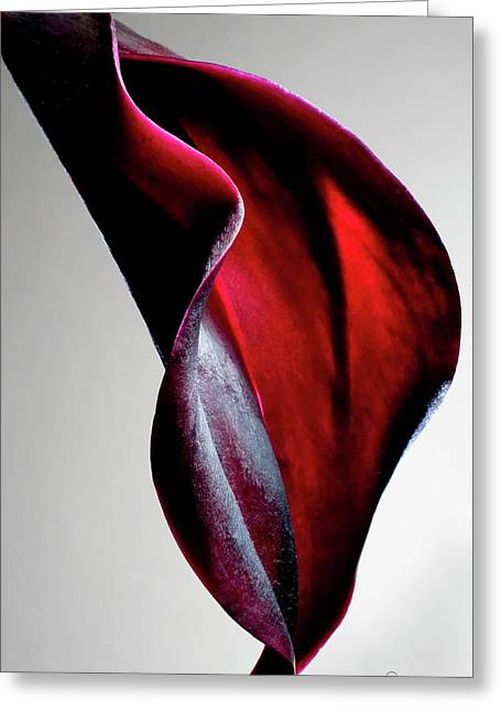 Calla Lily Greeting Cards - Black Calla Lily Greeting Card by Frederic A Reinecke