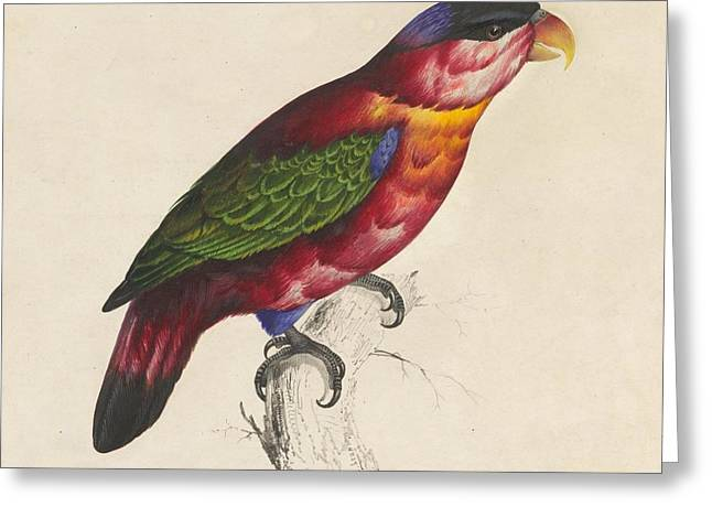 Hand-colored Lithograph Greeting Cards - Black-capped lory Greeting Card by Celestial Images